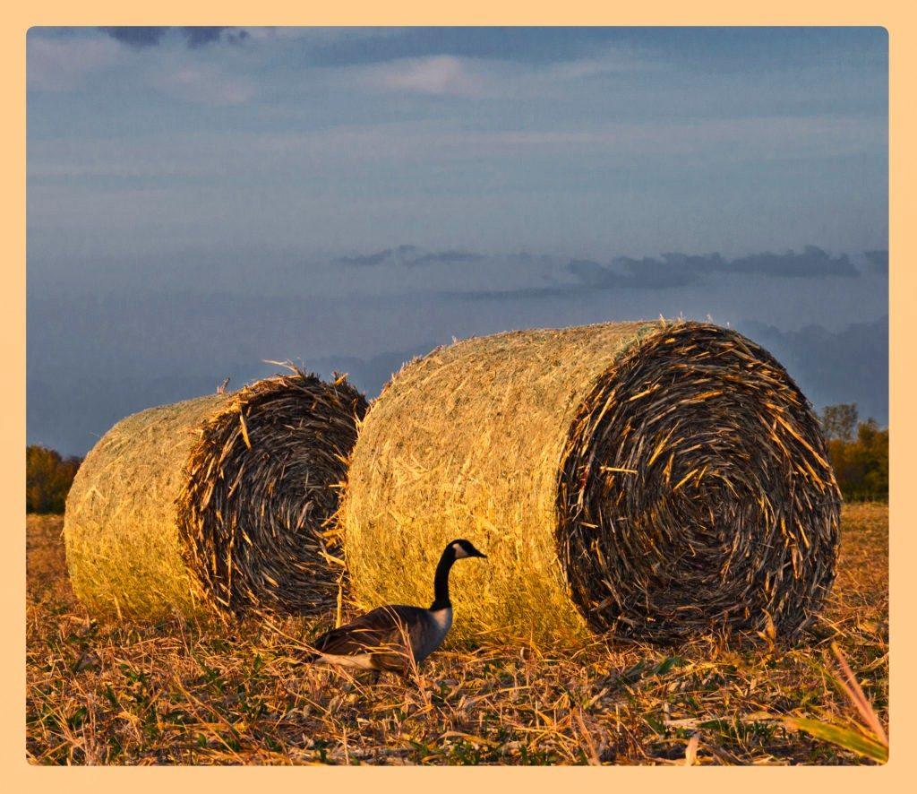 Hay-bale-3-w-border-fa-1024x886