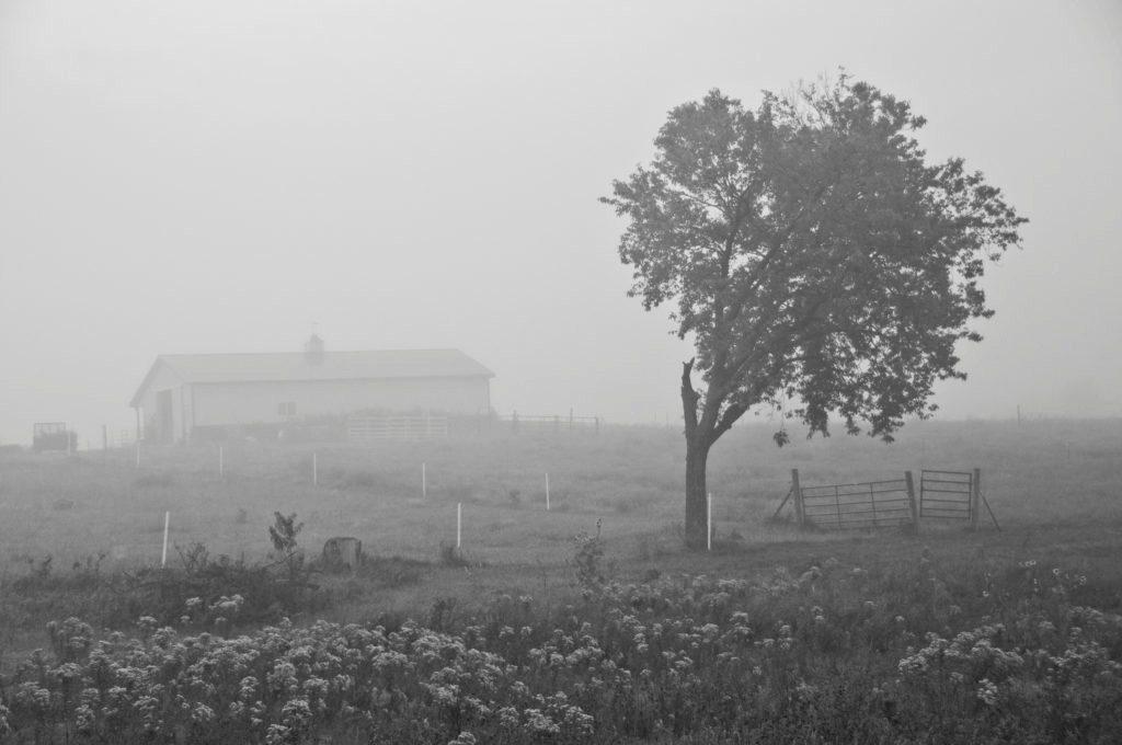 Pasture-fog-fa--1024x680