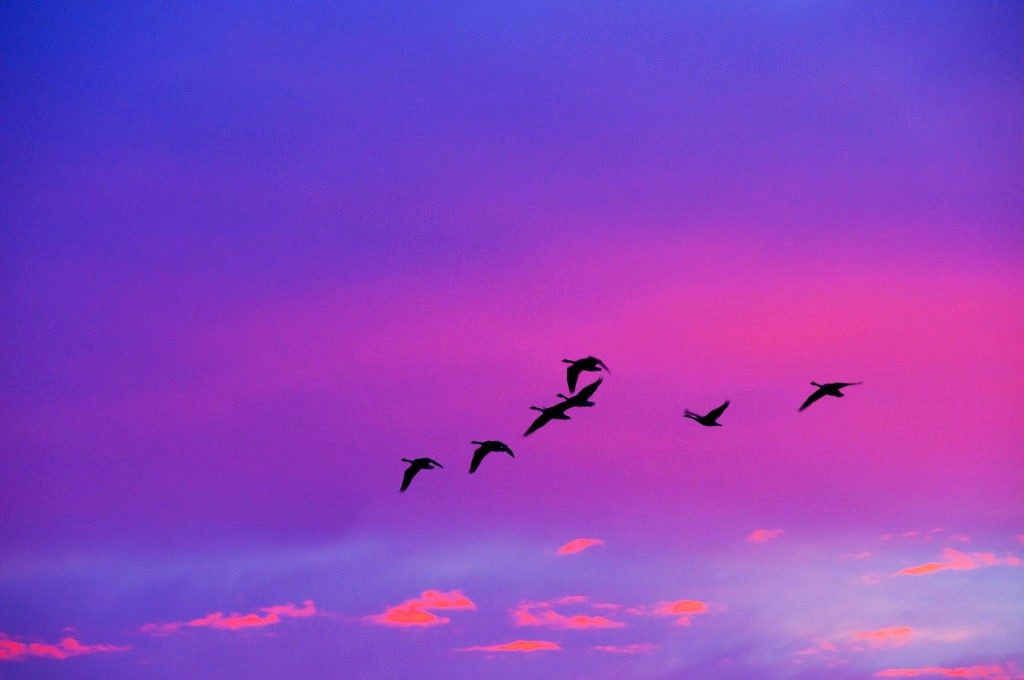 Sunset-birds-fa-1-1024x680