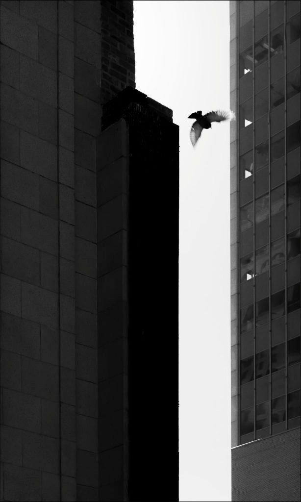 bird-flight-downtown-093016-b-fa-614x1024