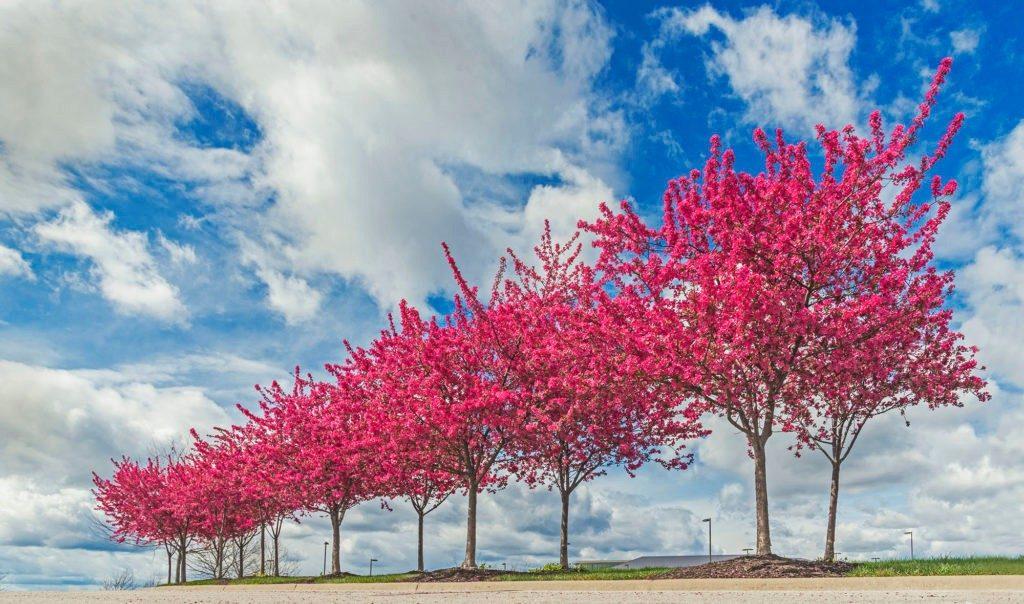 flowering-trees-nazzarene-global-center-lenexa-fa-1024x604