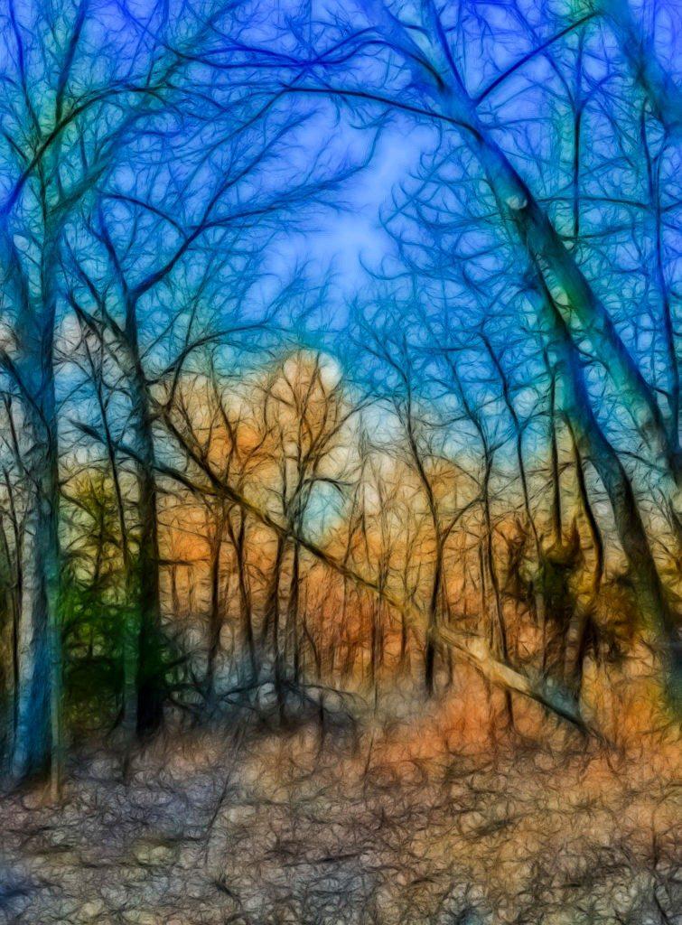 woods-in-winter-emnp-3-030117-Edit-fa--755x1024